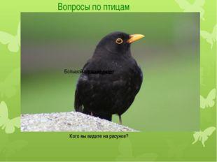 Вопросы по птицам Кого вы видите на рисунке? Кого вы видите на рисунке? Могил