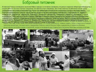 Бобровый питомник В начале прошлого века на огромной территории бывшей Россий