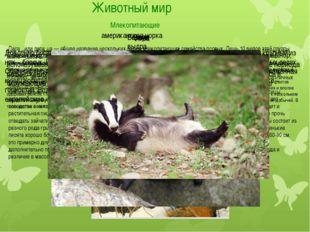 Животный мир Млекопитающие Из крупных хищников в заповеднике обитает волк. Зд