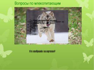 Вопросы по млекопитающим Кто изображён на картинке? Кто изображён на картинке