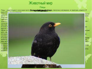 Животный мир Птицы Птицы — самая большая по числу видов группа позвоночных жи