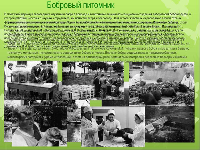 Бобровый питомник В начале прошлого века на огромной территории бывшей Россий...