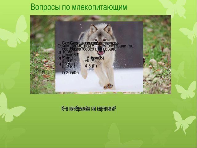 Вопросы по млекопитающим Кто изображён на картинке? Кто изображён на картинке...