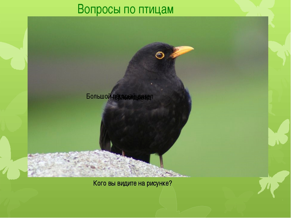 Вопросы по птицам Кого вы видите на рисунке? Кого вы видите на рисунке? Могил...