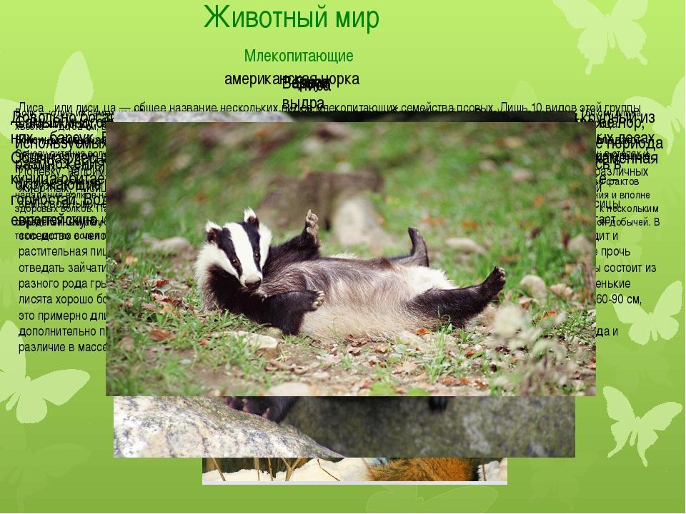 Животный мир Млекопитающие Из крупных хищников в заповеднике обитает волк. Зд...