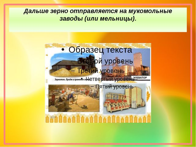 Дальше зерно отправляется на мукомольные заводы (или мельницы).