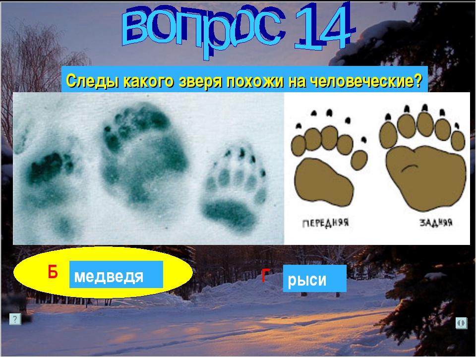 Следы какого зверя похожи на человеческие? лося А Б Г В медведя волка рыси