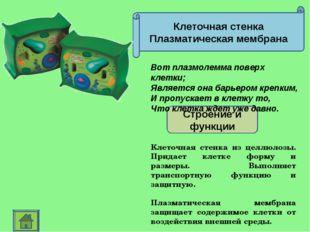 Клеточная стенка Плазматическая мембрана Строение и функции Клеточная стенка