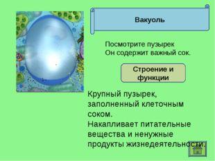 Вакуоль Строение и функции Крупный пузырек, заполненный клеточным соком. Нака