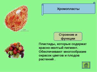 Хромопласты Строение и функции Пластиды, которые содержат красно-желтый пигме
