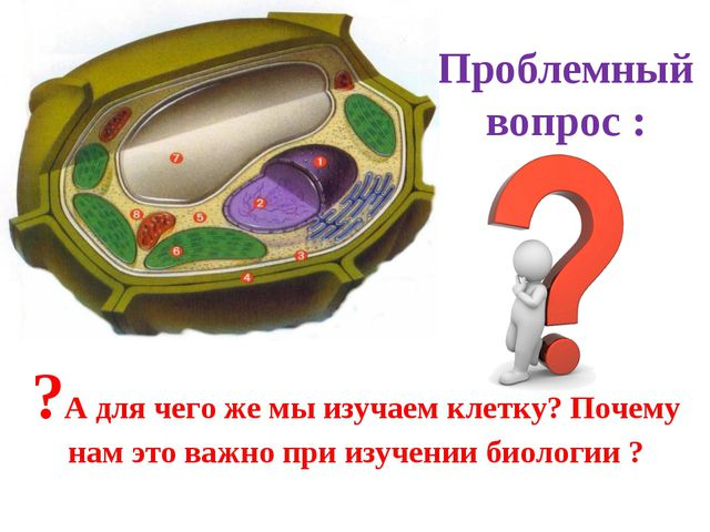 Проблемный вопрос : ?А для чего же мы изучаем клетку? Почему нам это важно пр...