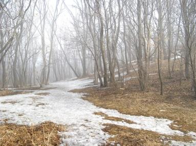 Мартовский лесок и туман. Владивосток, 18 марта 2013 года.