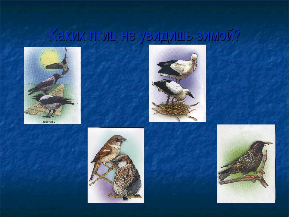 Каких птиц не увидишь зимой?