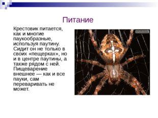 Питание Крестовик питается, как и многие паукообразные, используя паутину. Си