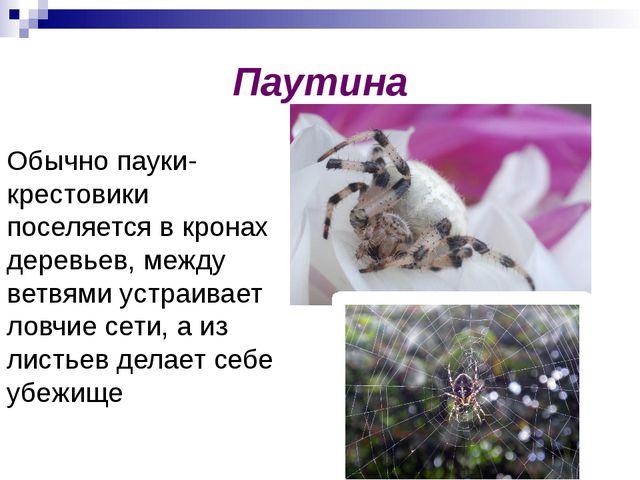 Паутина Обычно пауки-крестовики поселяется в кронах деревьев, между ветвями у...
