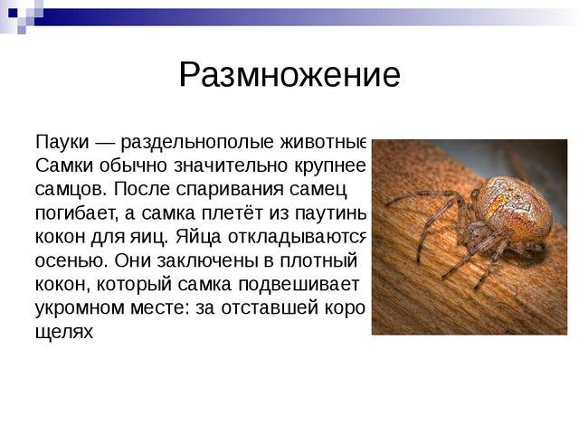 Размножение Пауки— раздельнополые животные. Самки обычно значительно крупнее...