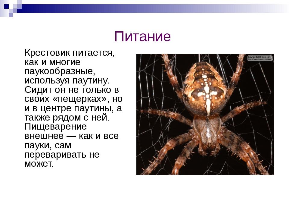 Питание Крестовик питается, как и многие паукообразные, используя паутину. Си...
