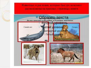 Животные и растения, которые быстро исчезают расположены на красных страницах