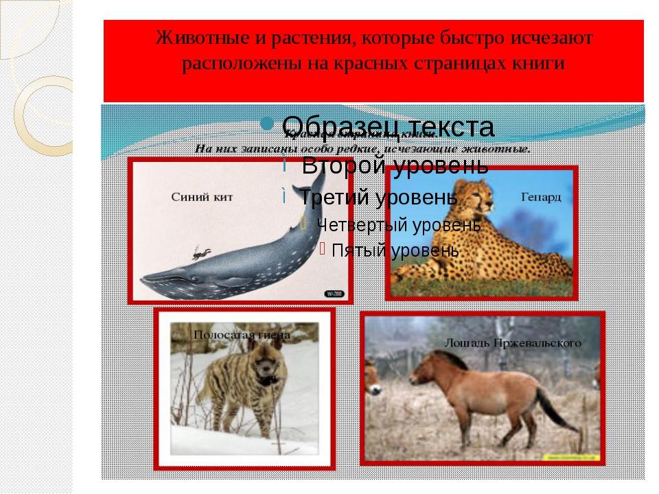 Животные и растения, которые быстро исчезают расположены на красных страницах...