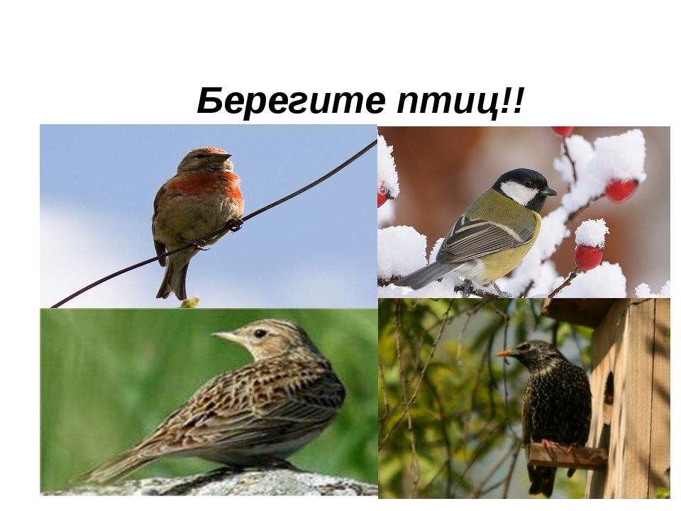 Берегите птиц!!
