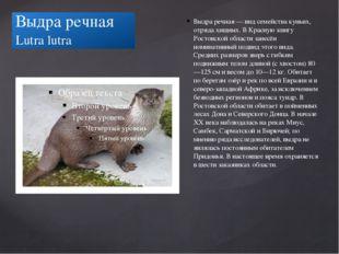 Выдра речная Lutra lutra Выдра речная — вид семейства куньих, отряда хищных.