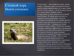 Степной хорь Mustela eversmanni Степной хорь — вид семейства куньих, отряда х