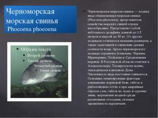 Черноморская морская свинья Phocoena phocoena Черноморская морская свинья — п