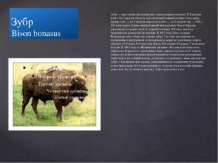 Зубр Bison bonasus Зубр — вид семейства полорогих, отряда парнокопытных. В Кр