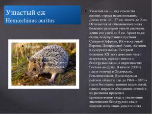 Ушастый еж Hemiechinus auritus Ушастый ёж — вид семейства ежовых отряда насе