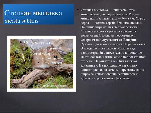 Степная мышовка Sicista subtilis Степная мышовка — вид семейства мышовковые,...
