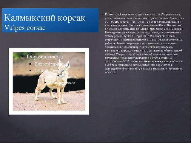Калмыкский корсак Vulpes corsac Калмыкский корсак — подвид вида корсак (Vulp...