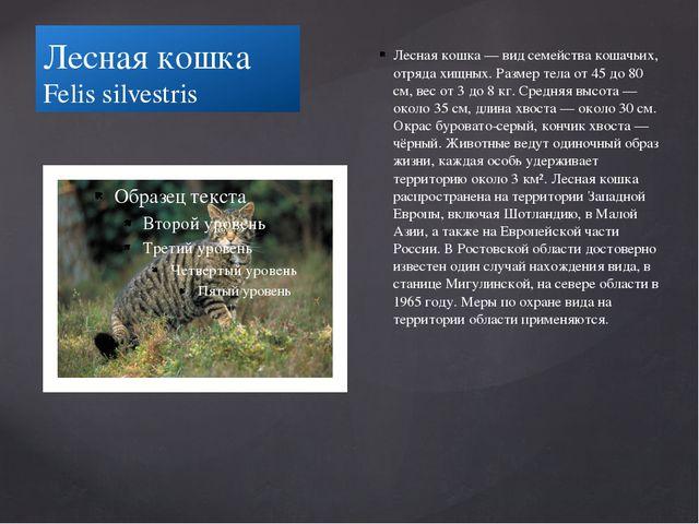 Лесная кошка Felis silvestris Лесная кошка — вид семейства кошачьих, отряда х...