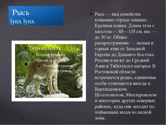 Рысь lynx lynx Рысь — вид семейства кошачьих отряда хищных. Крупная кошка. Д...