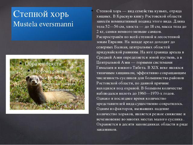 Степной хорь Mustela eversmanni Степной хорь — вид семейства куньих, отряда х...