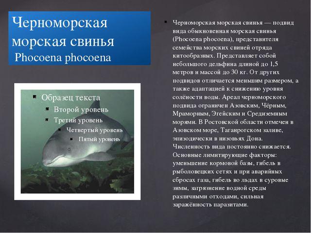 Черноморская морская свинья Phocoena phocoena Черноморская морская свинья — п...