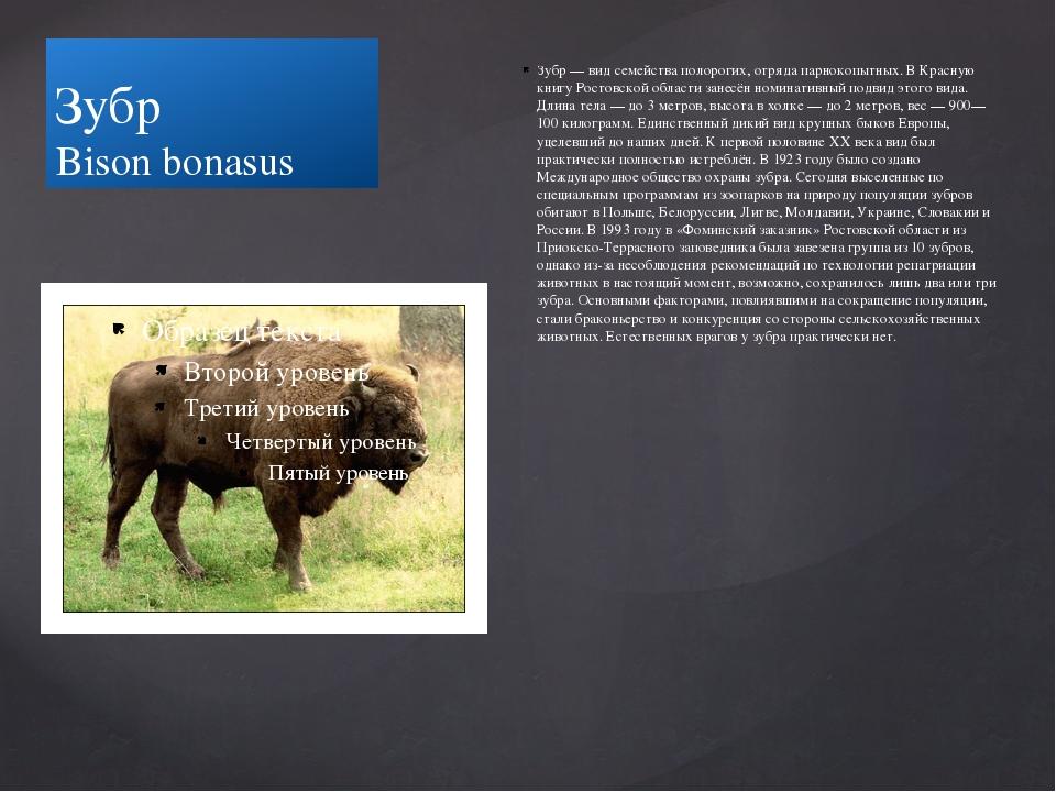 Зубр Bison bonasus Зубр — вид семейства полорогих, отряда парнокопытных. В Кр...
