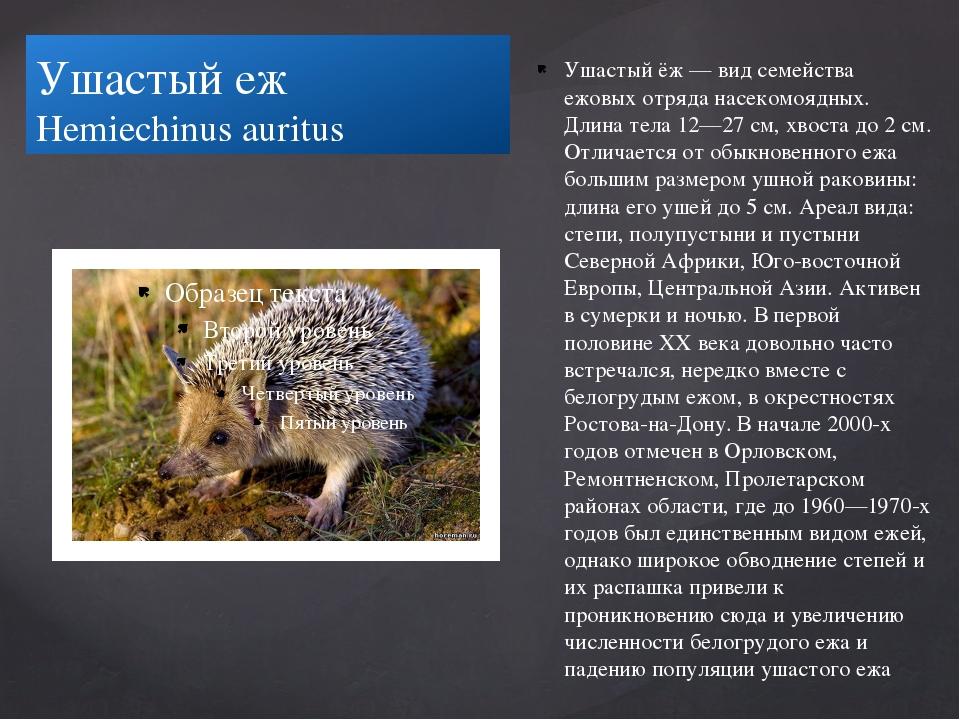 Ушастый еж Hemiechinus auritus Ушастый ёж — вид семейства ежовых отряда насе...