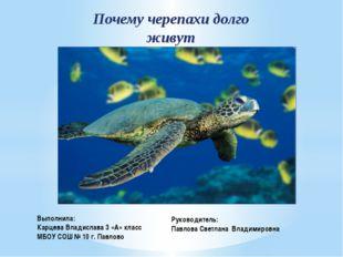 Почему черепахи долго живут Выполнила: Карцева Владислава 3 «А» класс МБОУ СО