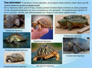 Заключение: Я изучила и узнала причины, по которым жизнь черепах может быть д