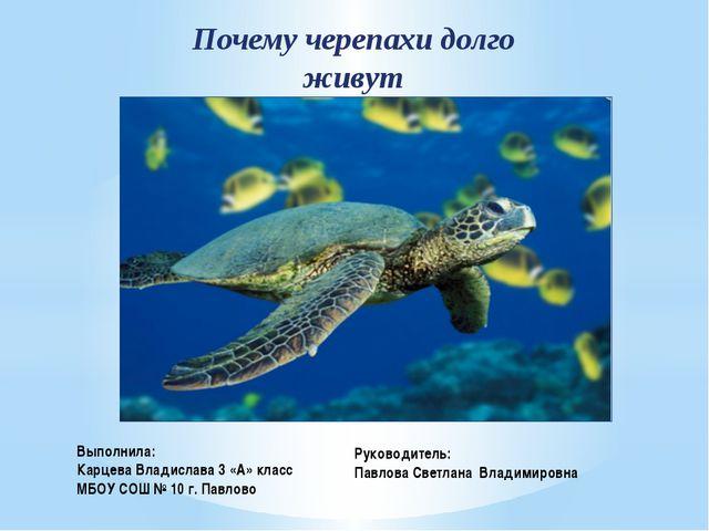 Почему черепахи долго живут Выполнила: Карцева Владислава 3 «А» класс МБОУ СО...