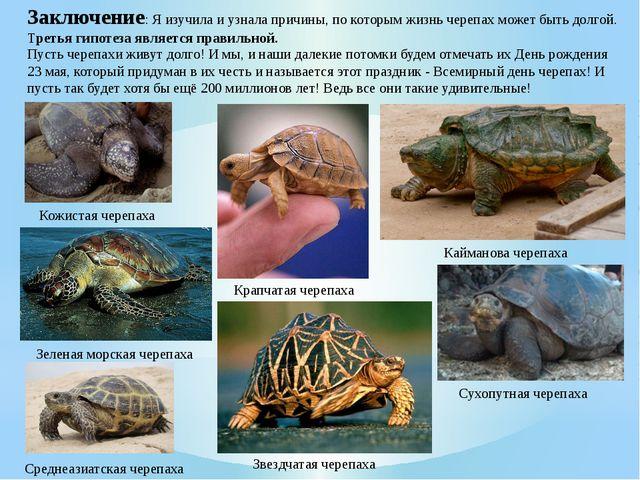Заключение: Я изучила и узнала причины, по которым жизнь черепах может быть д...