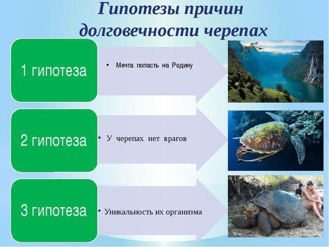 Гипотезы причин долговечности черепах Мечта попасть на Родину