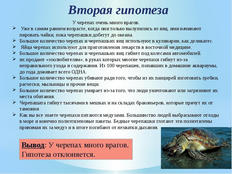 Вторая гипотеза У черепах очень много врагов. Уже в самом раннем возрасте, ко...