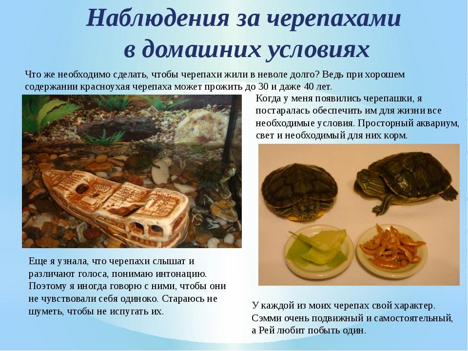 Наблюдения за черепахами в домашних условиях Что же необходимо сделать, чтобы...
