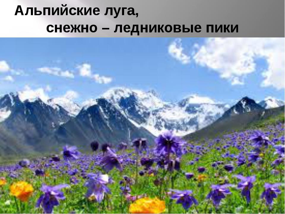 Альпийские луга, снежно – ледниковые пики