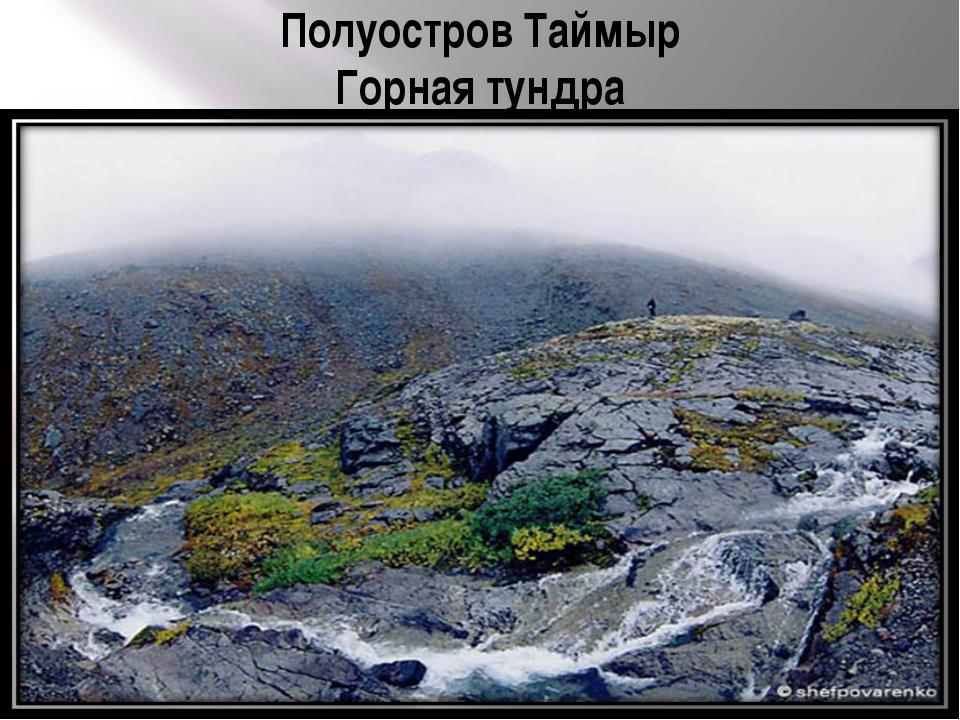 Полуостров Таймыр Горная тундра