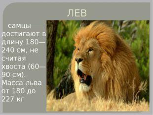 ЛЕВ самцы достигают в длину 180—240 см, не считая хвоста (60—90 см). Масса ль