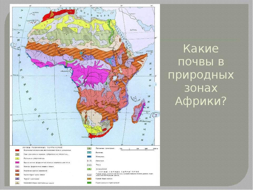 Какие почвы в природных зонах Африки?