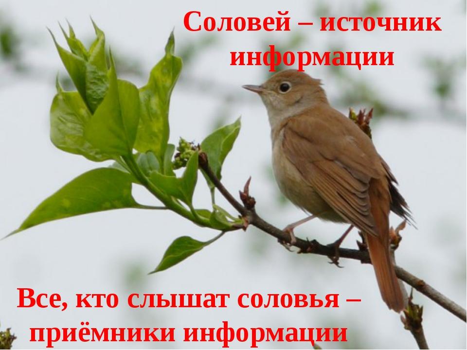Соловей – источник информации Все, кто слышат соловья – приёмники информации