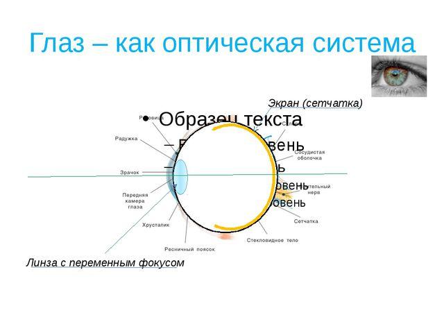 Глаз – как оптическая система Линза с переменным фокусом Экран (сетчатка)